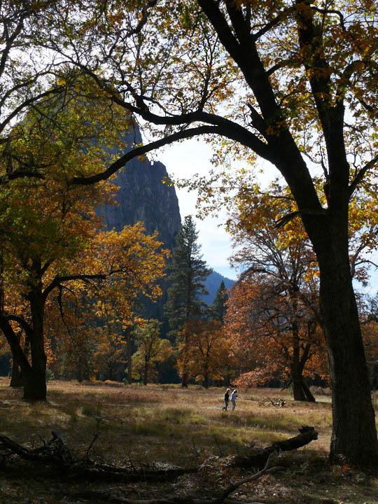 El Cap meadow stroll