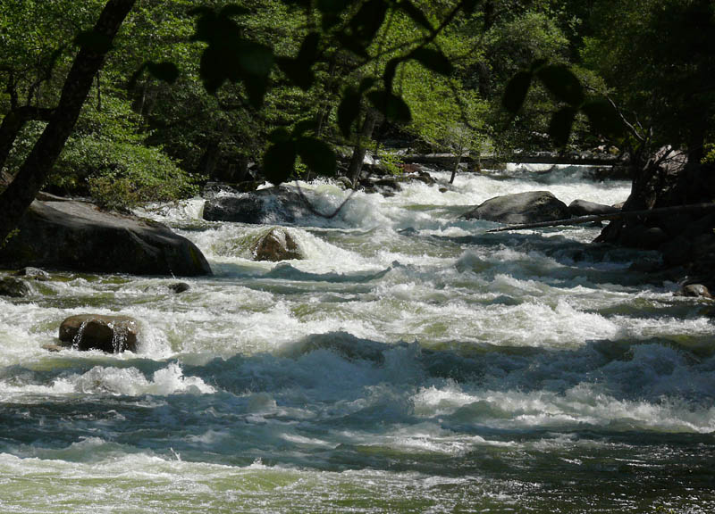 Rapid rapids
