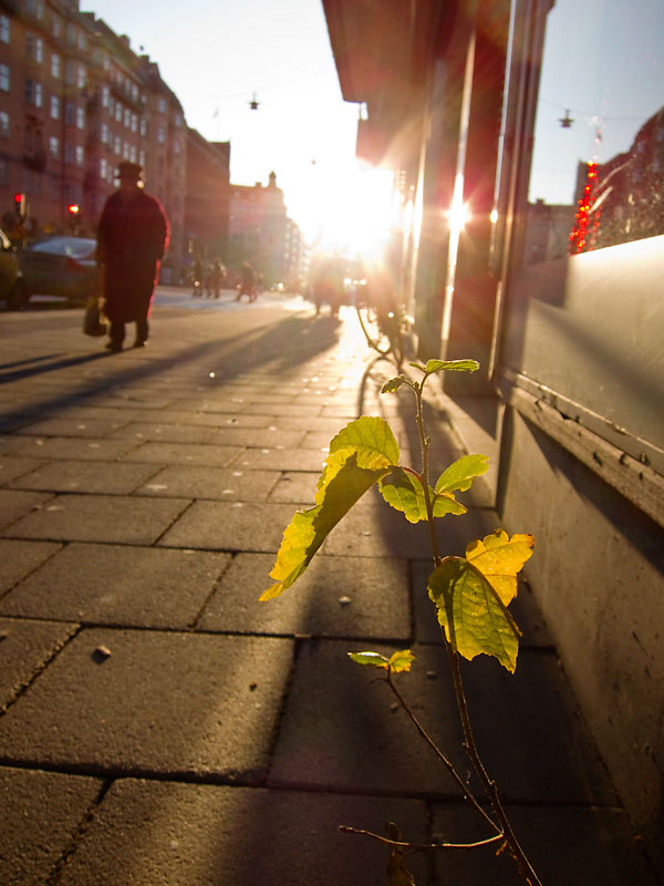 Low December sun on Sankt Eriksgatan