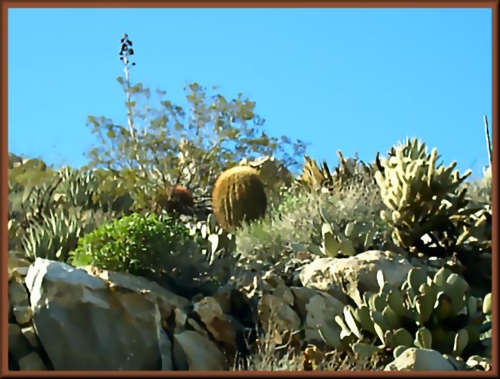 Painted Natures Garden