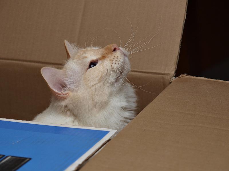Milo in the Box.jpg