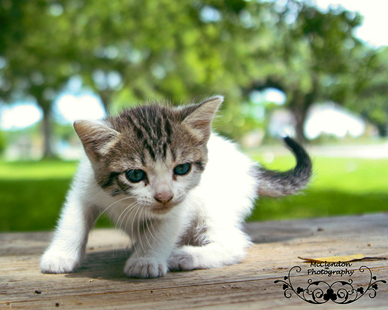 Kitten ADJ.jpg