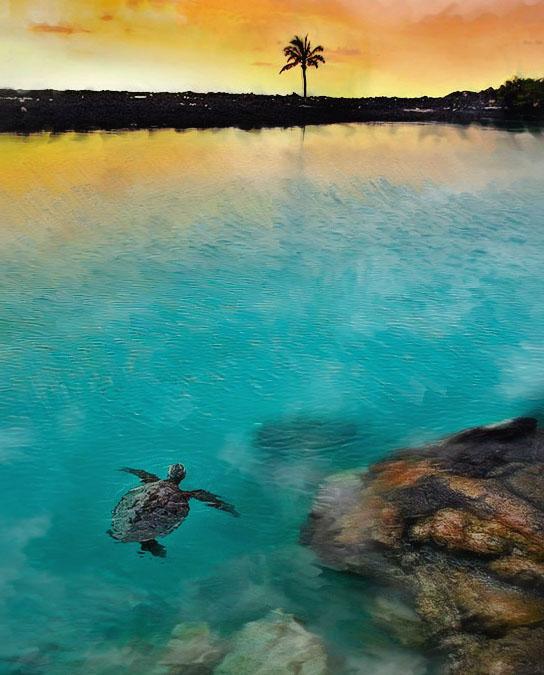 Turtle swimming at sunset