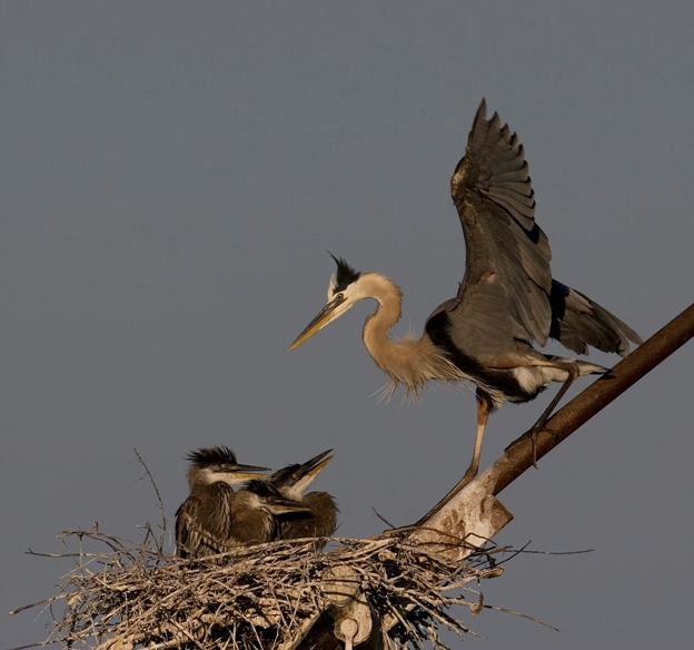 Attentive Mother