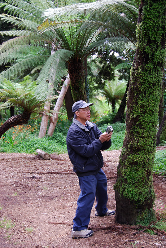 In the Tree Fern Garden<br />DSC_0881