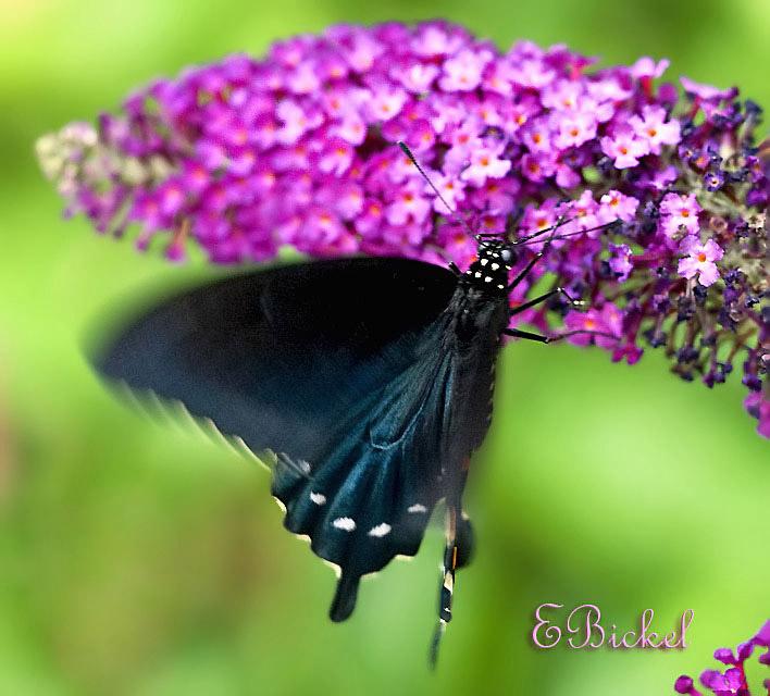 The Soft Flutter