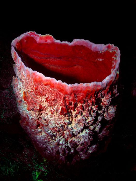 Beautiful Vace Sponge