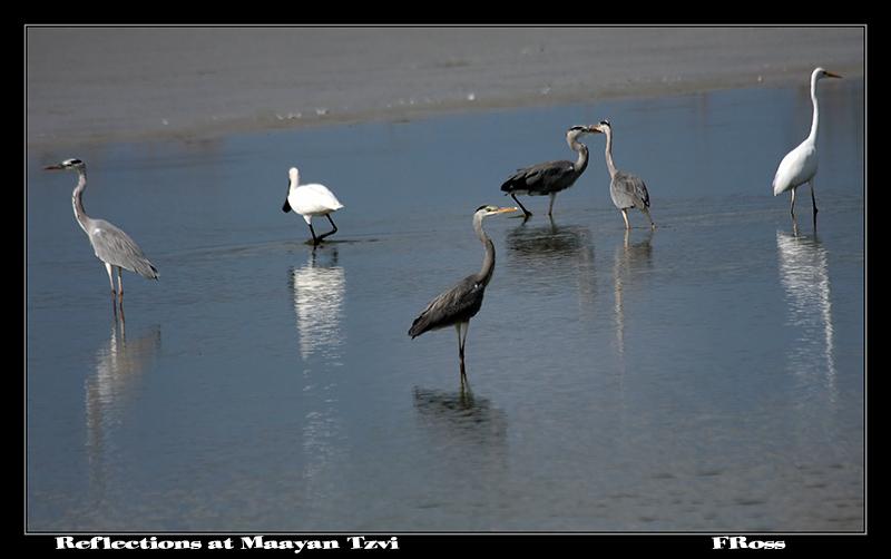 Reflections at Maayan Tzvi.jpg