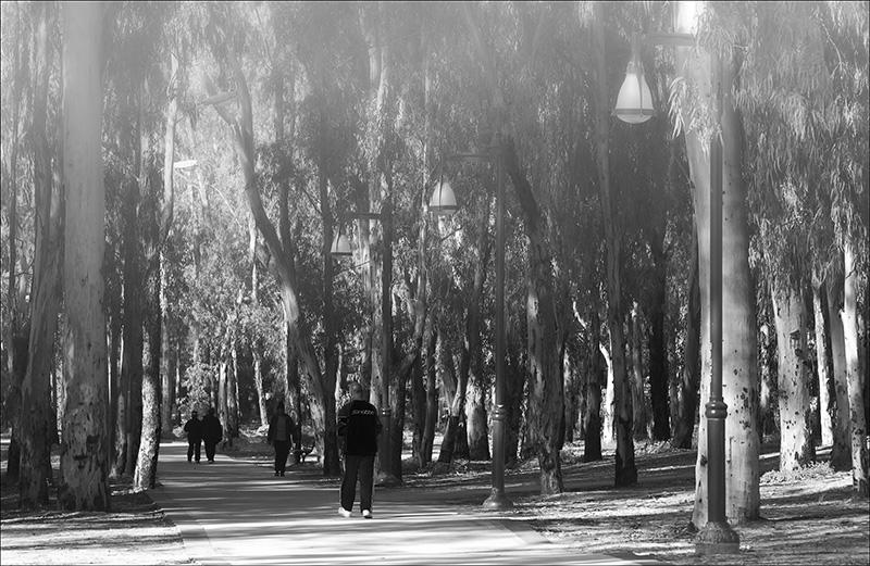 Winter Walk in Park Leumi.jpg