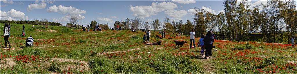 Spring in the Negev desert