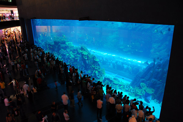 Dubai Aquarium drawing a large crowd shortly after opening in November 2008