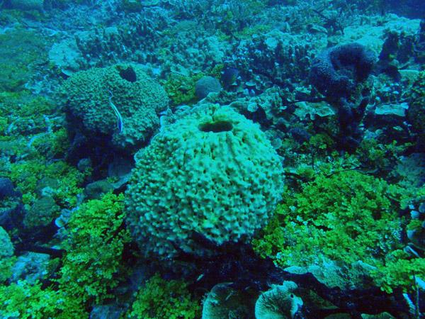 Gab Gab Reef, Apra Harbor