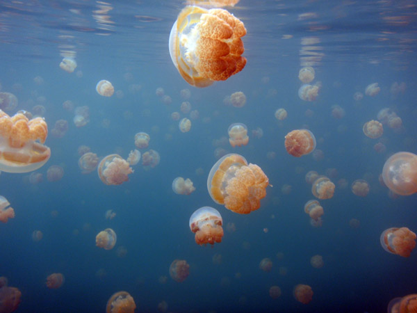 Its a bit like swimming in Jellyfish Soup