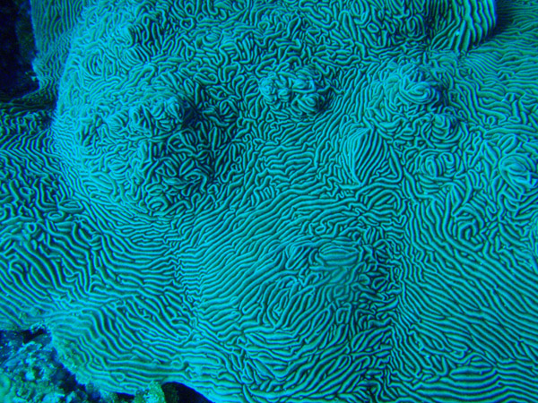 Coral, Big Drop-off