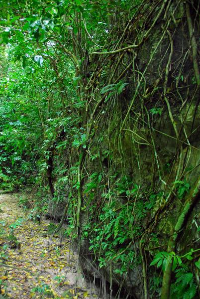 The trail on north Kemurbeab Island