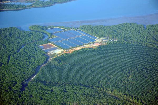 Palm oil plantation and ponds, Johor State, Malaysia
