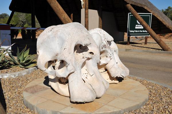 Elephant skulls at the gate to Addo Elephant National Park
