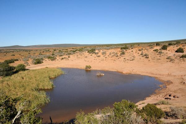 Waterhole on the Nzipondo Loop - Domkrag Dam