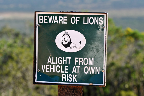 Beware of Lions - Addo Elephant National Park