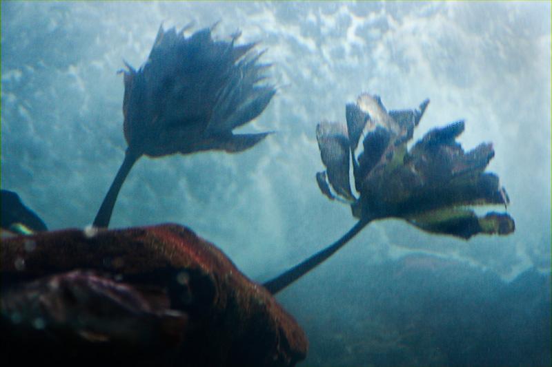 Fuzzy scene w/ purple striped fish