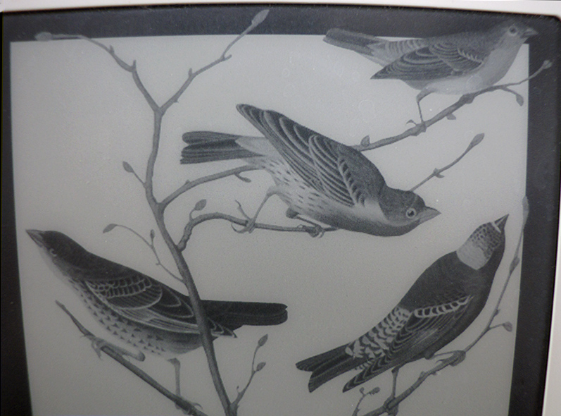 Close-up of Kindle 2s birds
