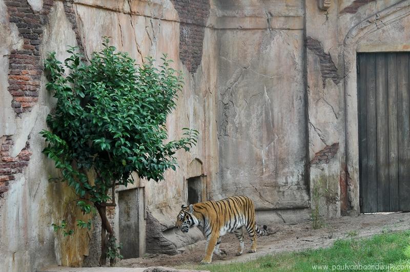 VS08 (149) Animal Kingdom
