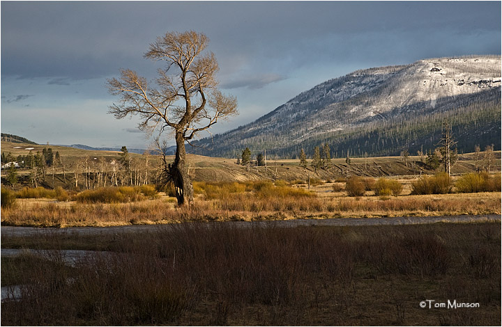 east end of the  Lamar Valley
