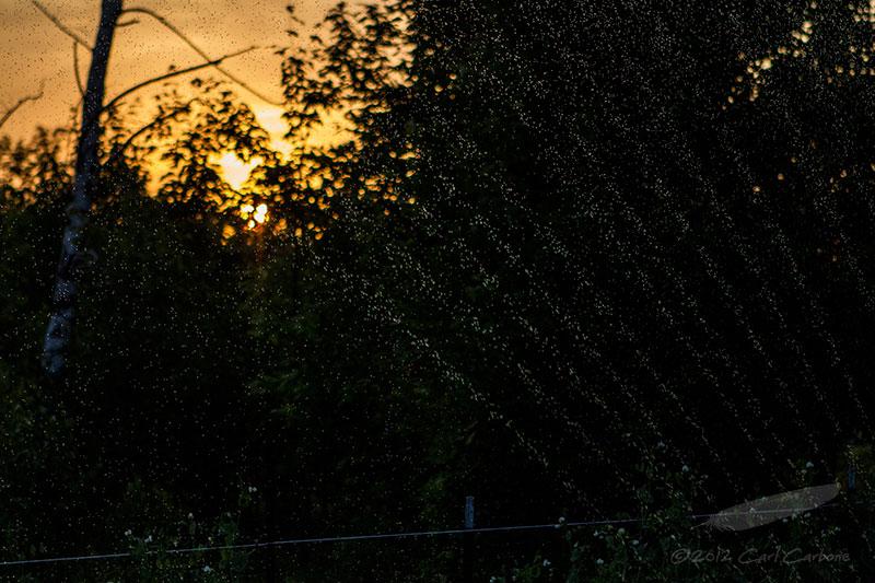 06/19/2012 - _MG_6467.jpg