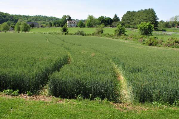 East Bradford Crop Circles?