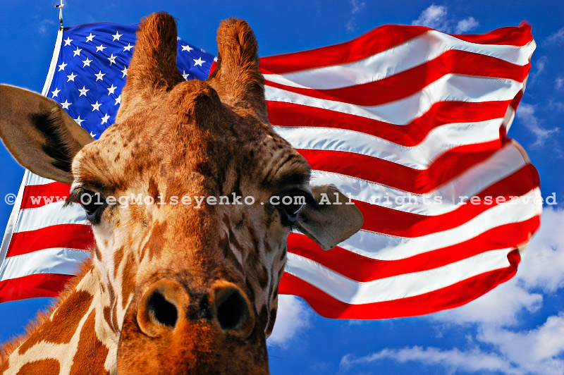 $410 - State Giraffe