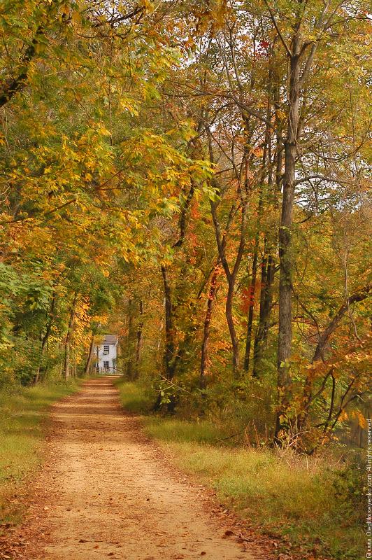 $290 - Autumn Walk