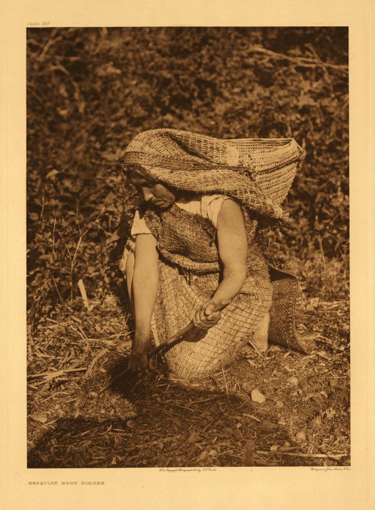 Hesquiat root digger