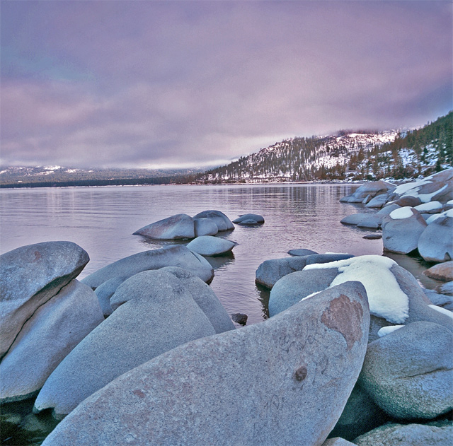 Tahoeseals