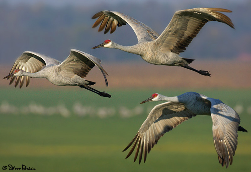 3 Sandhills for the Price of 1