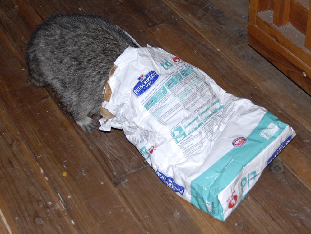 Coonie in TD Bag roll 90_2 2007-08_DSC0496.jpg