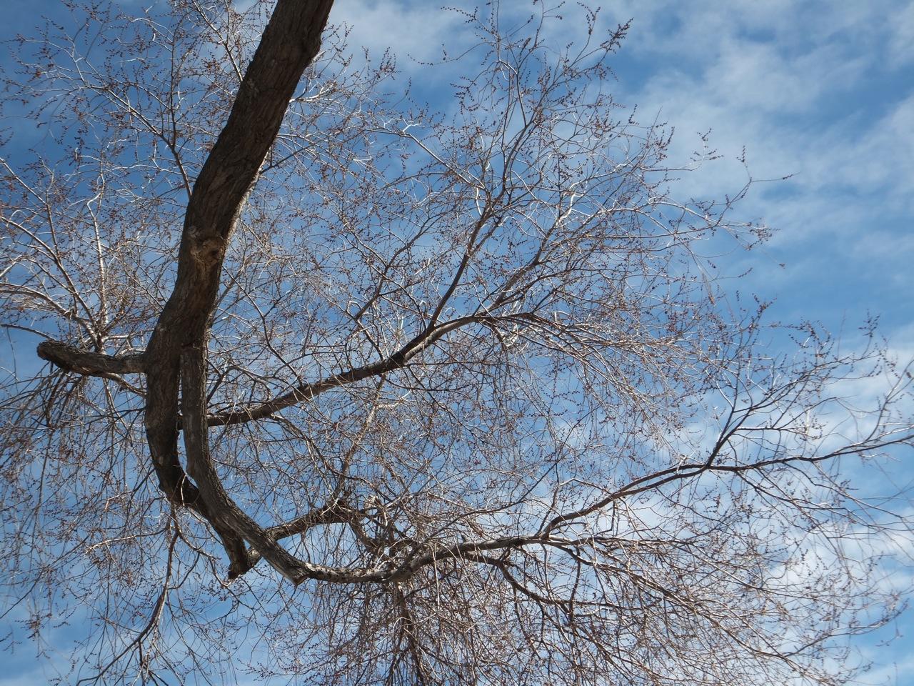 ISU Parking Lot Tree DSCF5244.jpg