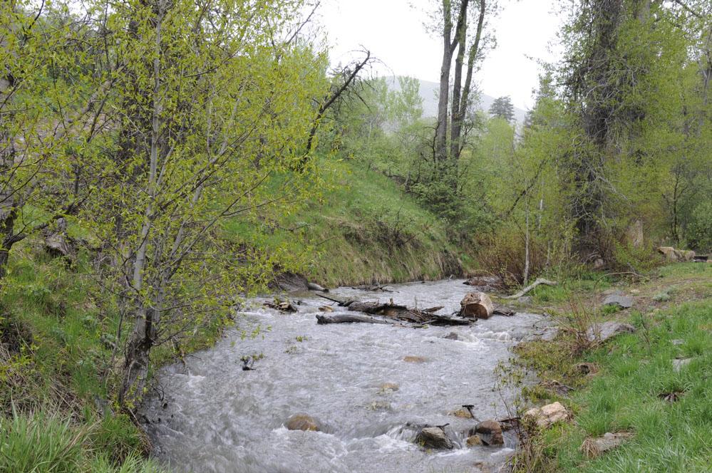 Springtime at Inman Creek Inkom _DSC3753.jpg