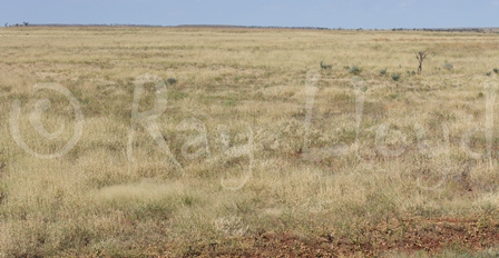 Cracking Clay Plains