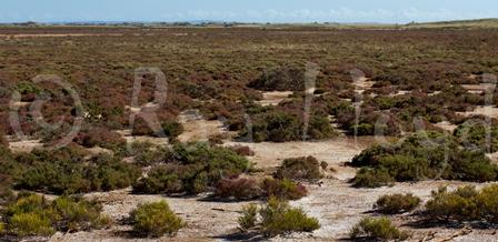 Coastal Samphire Flats