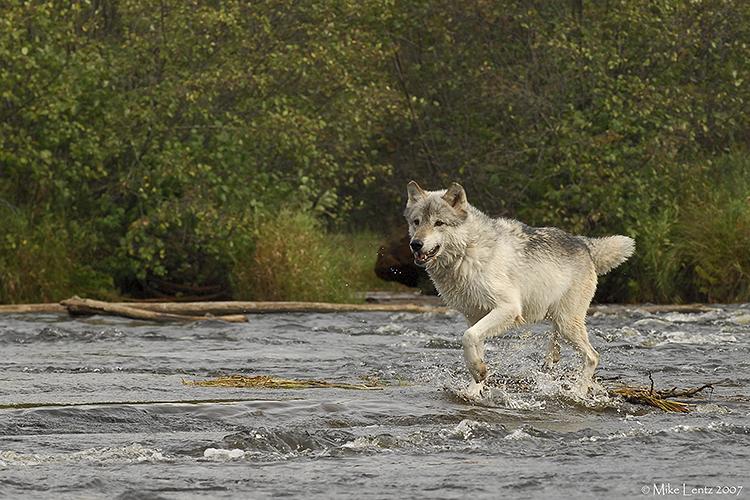 Wolf river sprint