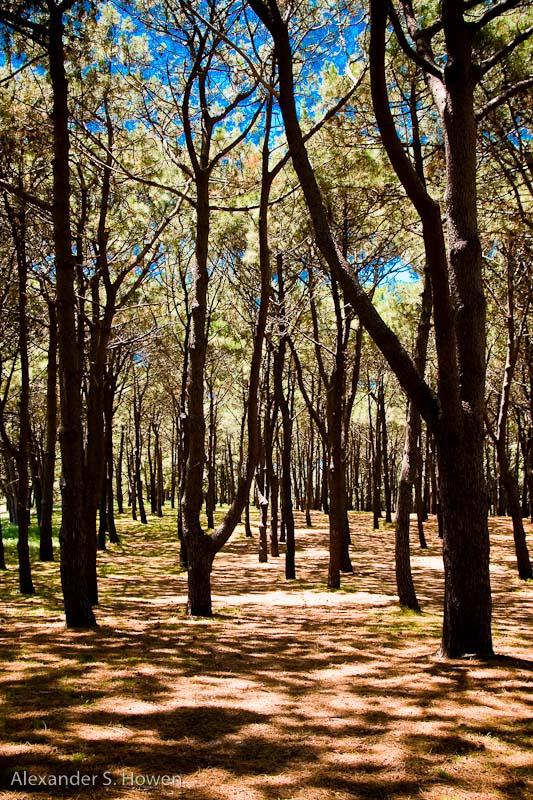 Centennial Park forest