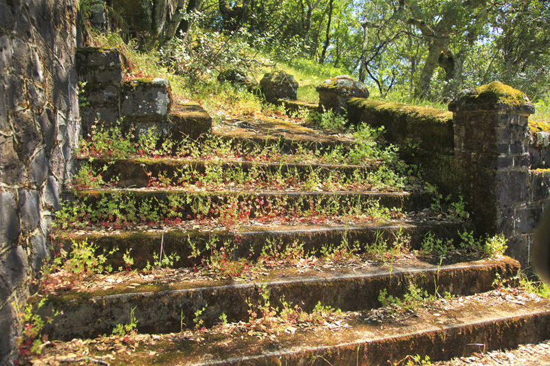 turning steps ivy.jpg