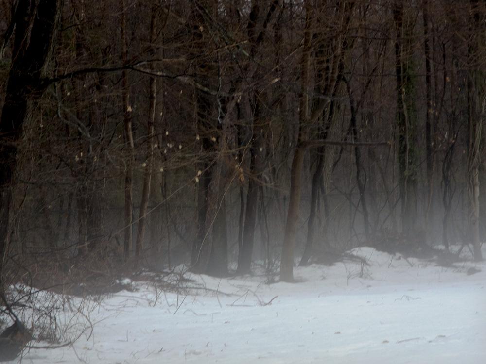 Late winter ground mist.