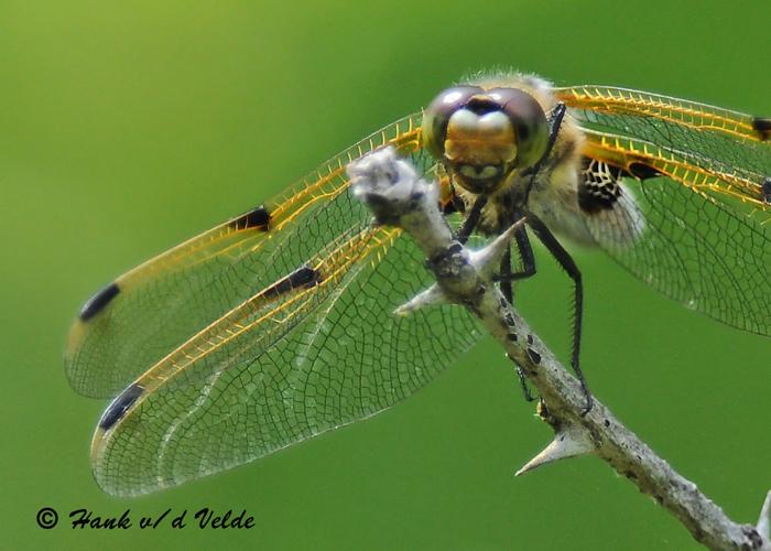 20090522 432 Dragonfly.jpg