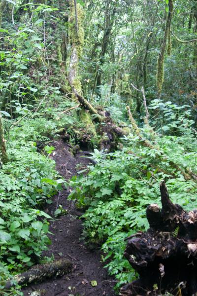 Vereda Hacia la Cumbre en la Parte de Bosque