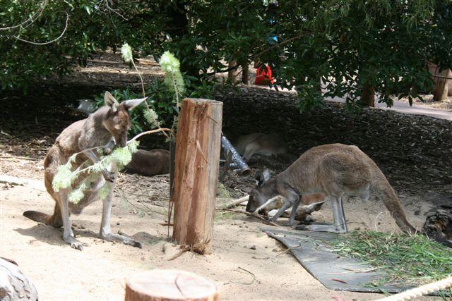 Perth Zoo (94).jpg
