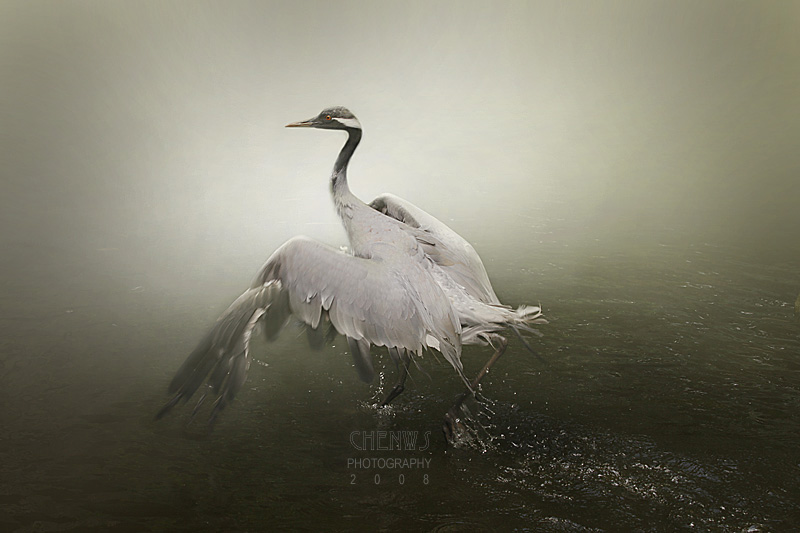 Crane, Misty Morning