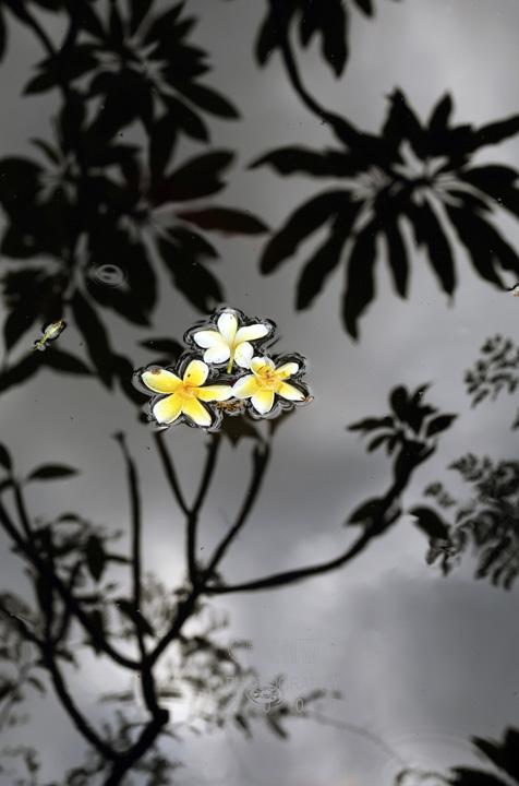 Frangipani (Bali)