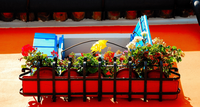 Flowers near the Roof