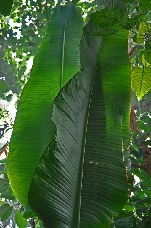 Serres Tropicales-045.jpg